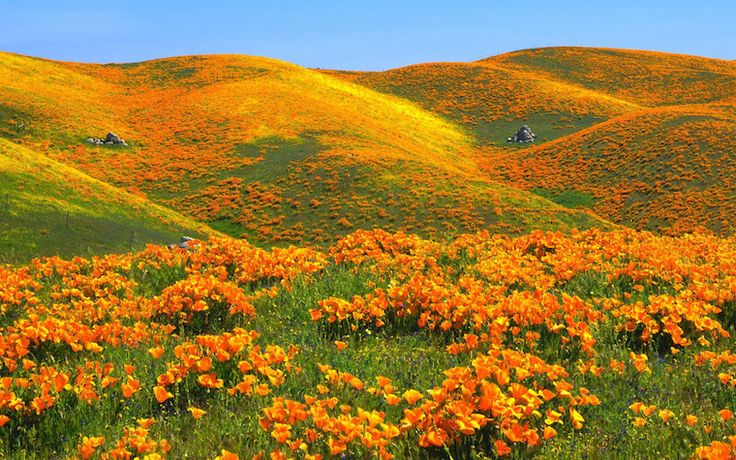 Antelope Valley Poppy Reserve: Beautiful orange California poppies and other wildflowers growing on hillsides and fields (season can be from Feb/March, with peak usually in April).