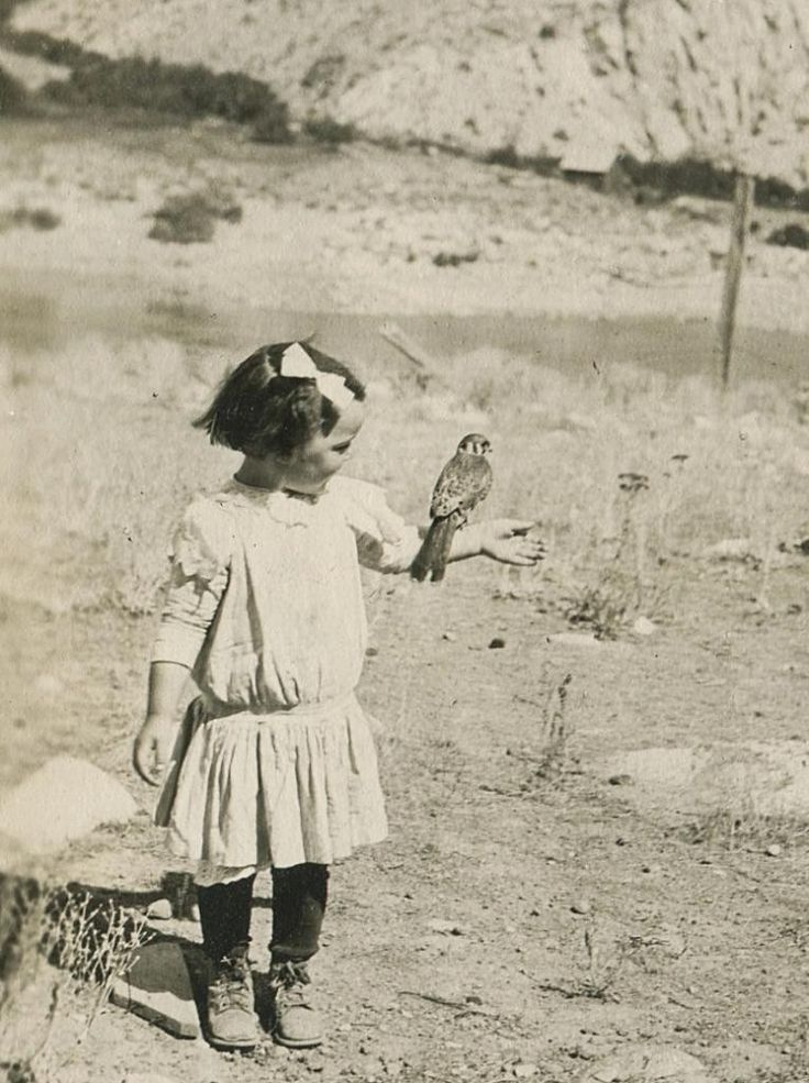 Prairie bird - 1911. found photo: North America, Sparrow Hawks, Prairie Birds, Gardens Smackdown, Photography Vintage, Gardens Blog, Vintage Photo, 1911 Photography, Young Girls