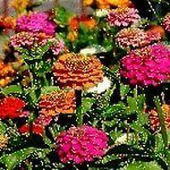 hareketli lale ve güller — Yandex.Görsel – Gül Resimleri, Hareketli Gül Resimleri, Sevdiklerinize Özel Bayram Ciçekler...