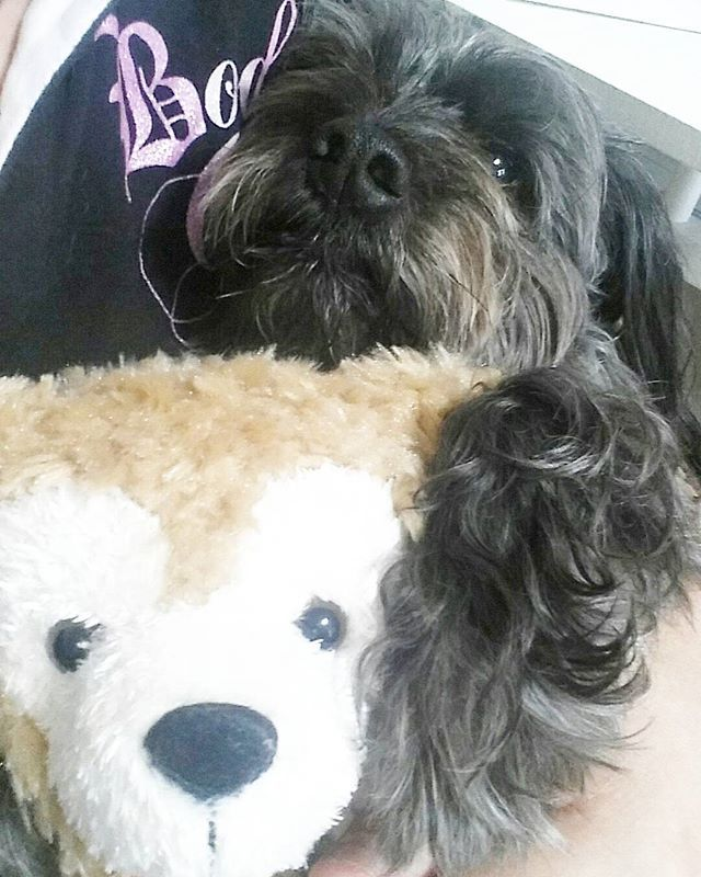 退屈ぅー😦💭退院延びた😢早く帰りたい💔今は我慢我慢(ง •̀_•́)ง‼#王チャンモ #ペキニーズ  #マルチーズ のmixで#マルペキ  #愛犬love  #愛犬  #愛犬家  #愛犬バカ  #dogsofinstagram  #dog  #dogs  #dogstagram  #犬スタグラム  #チワックス  #チワワ  #ワイヤーダックス  #chihuahua &  #dakkusuhundo の #mix  #lovelovelove  #japanese  #love  #lovely  #loveit #cute  #cutedog  #japan  #pekingese & #maltese のmix#チワックス倶楽部