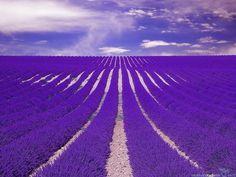 【一生に一度は見たい絶景】南仏プロヴァンスのラベンダー畑が息を飲むほど美しい | RETRIP