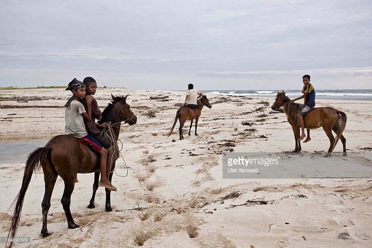 Sumbanese children play with their horses on the beach on March 4, 2013 in Sumba Island, East Nusa Tenggara, Indonesia. Sandalwood pony horses are native to the island of Sumba in Indonesia. For the people of Sumba, the Sandelwood horse has an important role in all aspects of their daily life, including transportation and culture. On the island of Sumba the ancient tradition of Pasola still draws large crowds and tourists. Pasola involves two teams of men on horseback charging towards each…