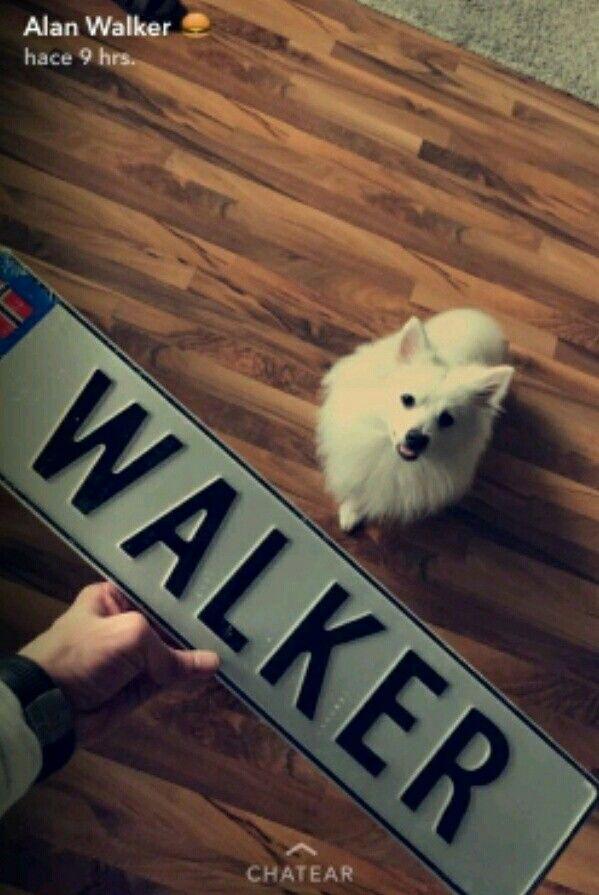 Oh My Word Cute Alan Walker Allen Walker Walker