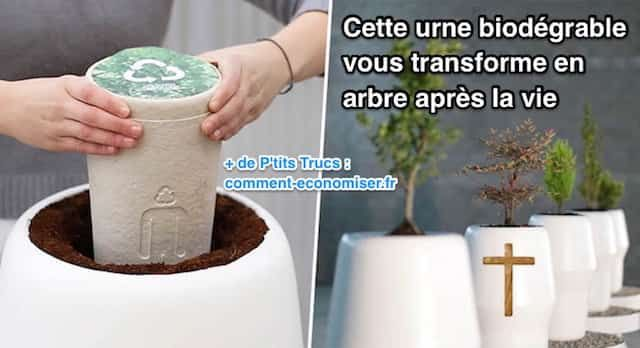 Un designer catalan a imaginé une urne funéraire biodégradable dans laquelle des arbres pousseraient grâce aux cendres des défunts. Son objectif ? Que les arbres remplacent les tombes dans les cimetières !  Découvrez l'astuce ici : http://www.comment-economiser.fr/urne-funeraire-biodegradable-vous-transforme-arbre-vie.html?utm_content=buffer9636c&utm_medium=social&utm_source=pinterest.com&utm_campaign=buffer