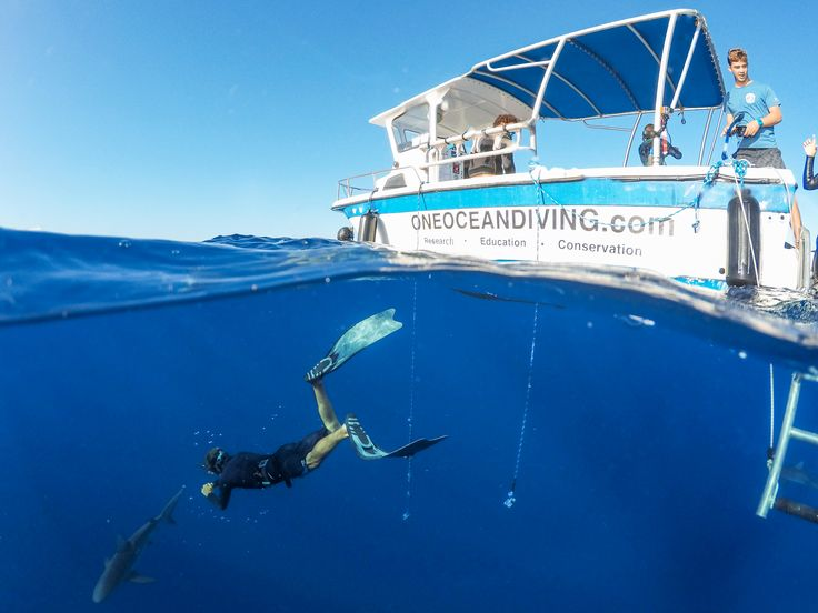 Open ocean diving in shark infested waters is just another day on Oahu. #GoPro #Hawaii #GoProTravel