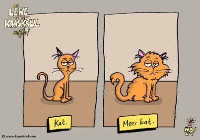 Kat vs meer kat Afrikaans grappe Idees vol vrees