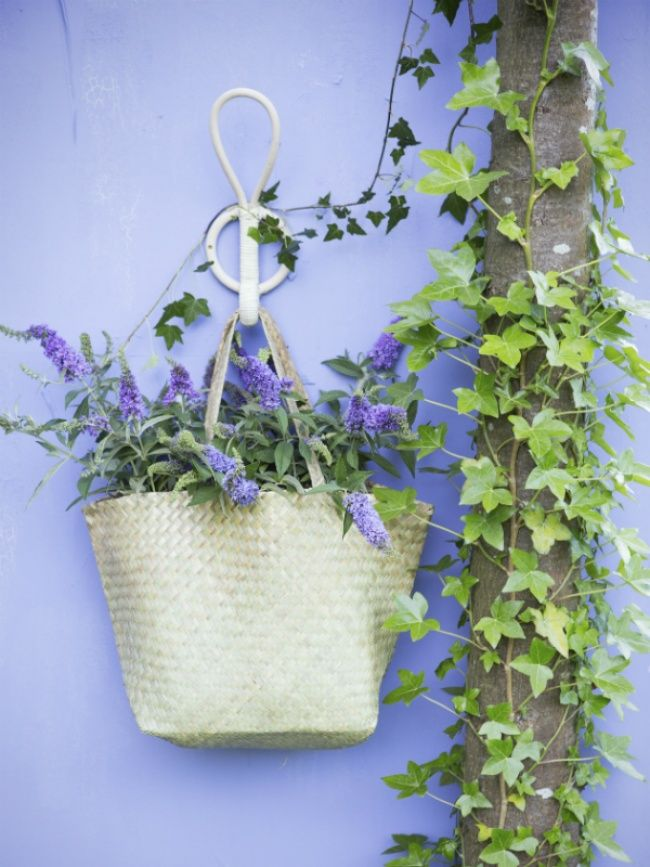 Les 25 meilleures id es de la cat gorie arbres for Arbres plantes fleurs