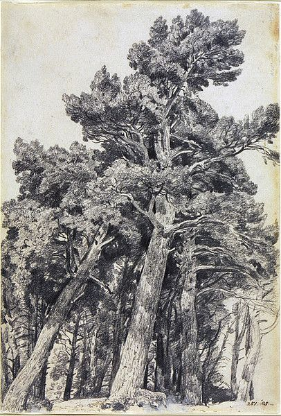Fir Trees at Hampstead | John Constable