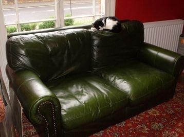 Sexy green leather sofa!