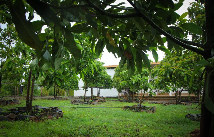 An orchard as a garden. Quite something!