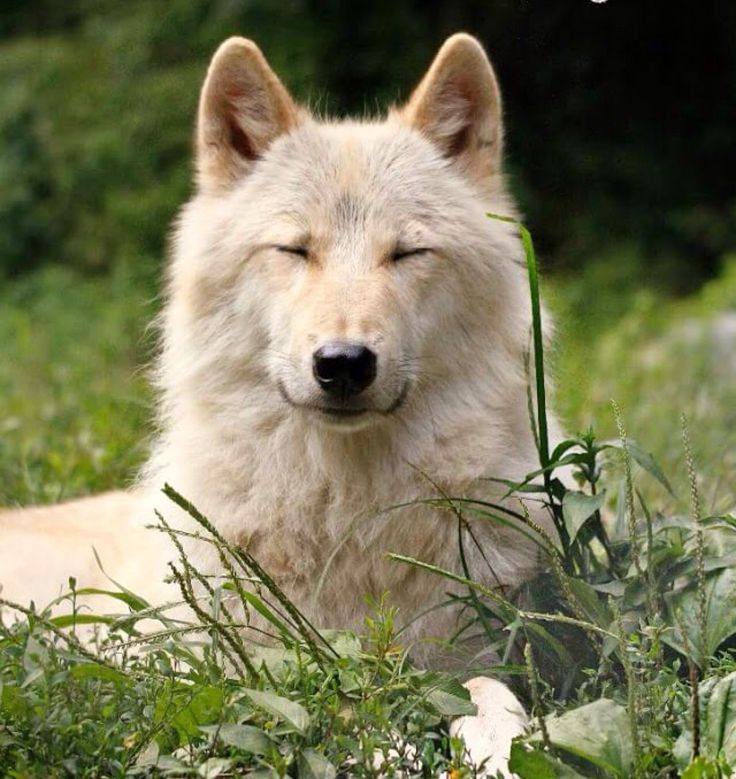 "wolfsheart-blog: ""  by Wolf C. Center """