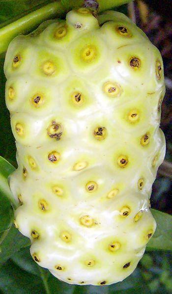 Noni Fruit: Also called The Dog Dumpling. Interesting this look like a cross between pineapple n jack fruit i wana taste