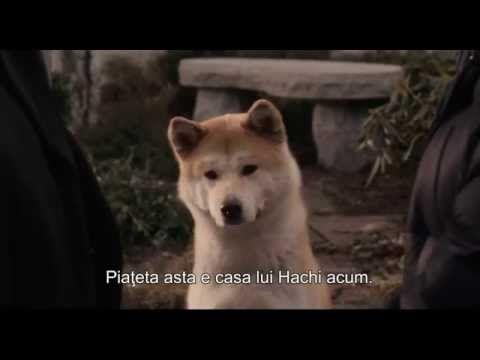 FILM - Hachiko ( Povestea unui câine 2009 ) - ( HD ) - A Doua Parte ...by BEDREAG ALIN - YouTube