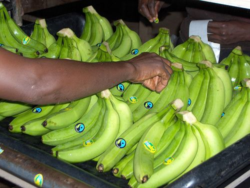 Make fruit fair! Labelling of Fairtrade bananas from Ghana