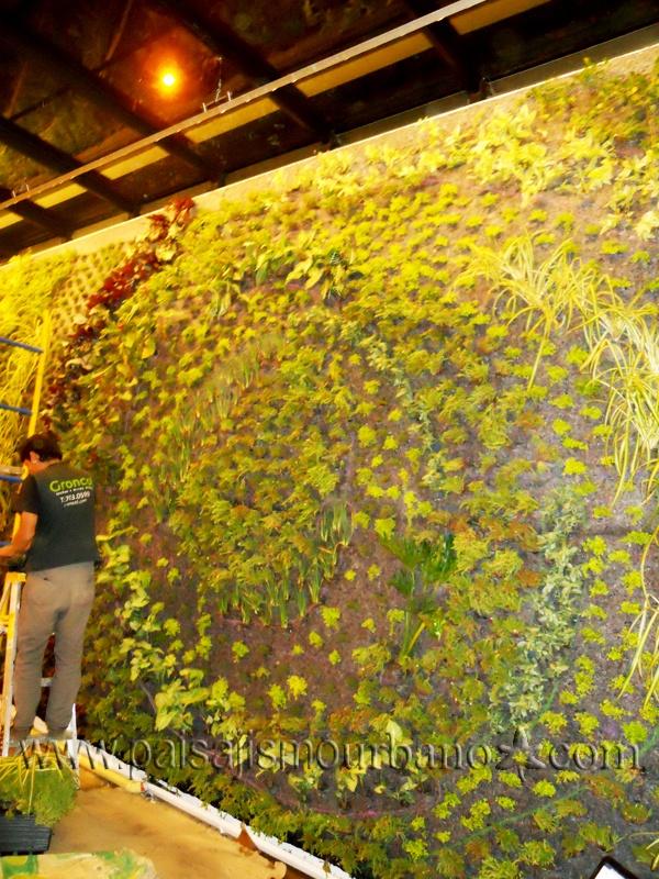 Jard n vertical realizado por paisajismo urbano en el for Paisajismo bogota
