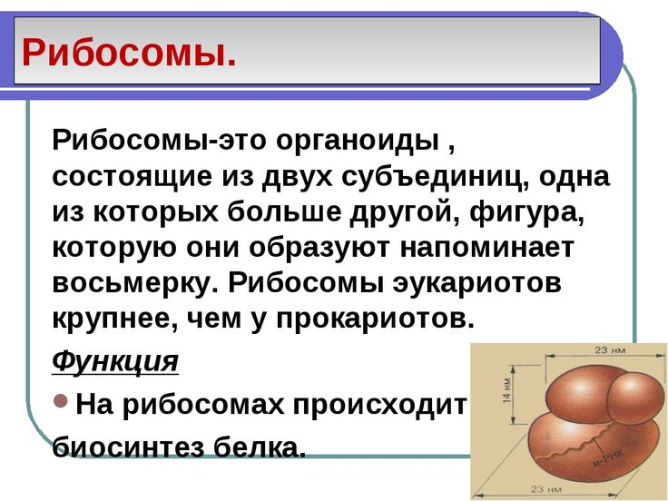 Тетрадь по английскому языку азарова millie 4 класс скачать в текстовом формате