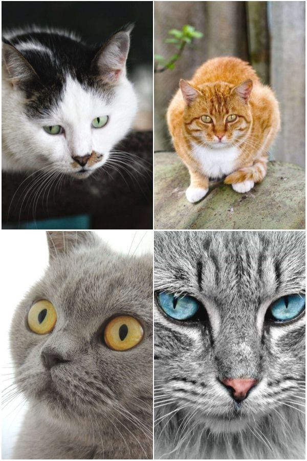 Top Cat Care In 2020 Cat Care Cats Cat Top