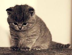 Can fatty chubby kitties