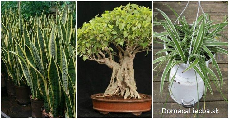 Rastliny zvyčajne produkujú kyslín len počas dňa, keď majú svetlo. Tieto 3 to však dokážu aj v noci, čím zlepšia spánok a celkové zdravie.