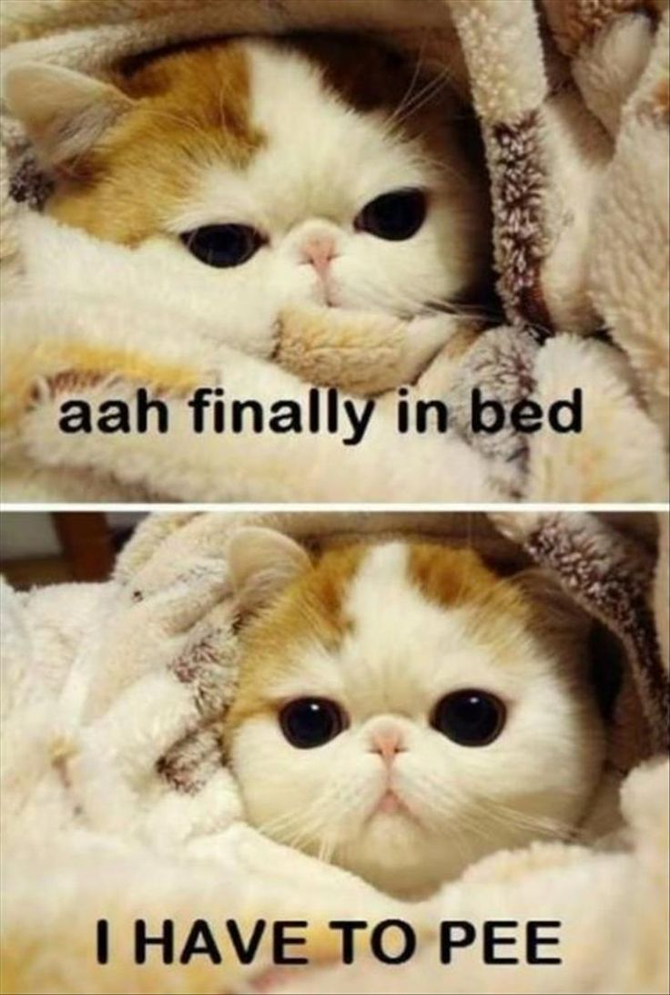 Omg this is soooo true. This happens to me like every time I have been waiting a whole day to get in bed.