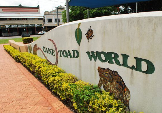 Cane Toad World Australia Bufo marinus | The Travel Tart Blog