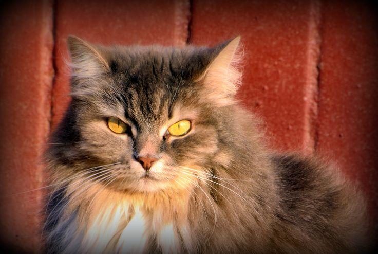 Этот кот живет в подвале нашего дома, вход в его апартаменты - - через вентиляционное отверстие. Не беспокойтесь он не голодает, его весь дом кормит.