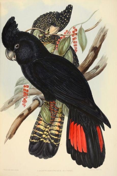 Raro conjunto de libros de aves de John Gould venta - en imágenes | Arte y diseño | The Guardian