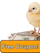 Chickens for Sale | Baby Chicks for Sale from eFowl.com with Free Shipping | Egg Layers, Rare Chicken Breeds, Bantam Chicks, Meat Breeds, and More