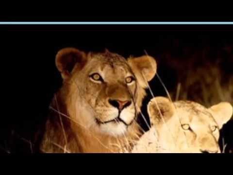 Tremisana Game Lodge Safaris