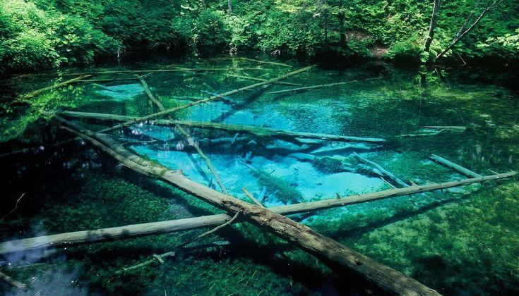 神の子池 - きよさと観光協会