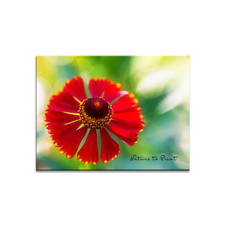 Blumenbild Solo für eine rote Sonnenbraut | Leinwandbild