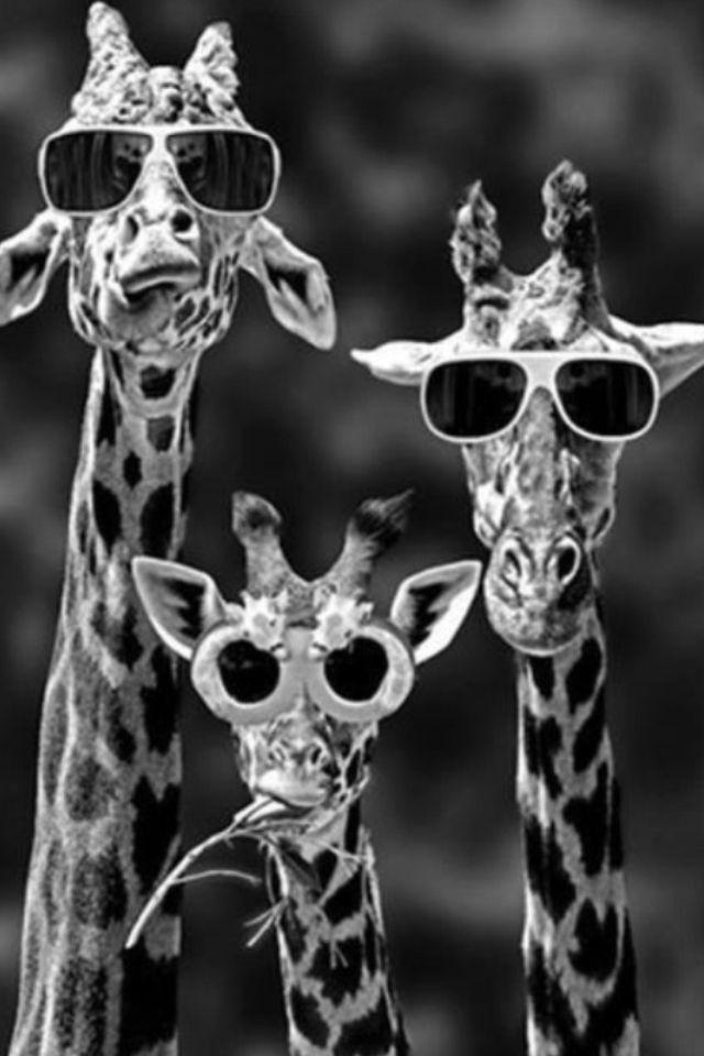 giraffes in love black and white
