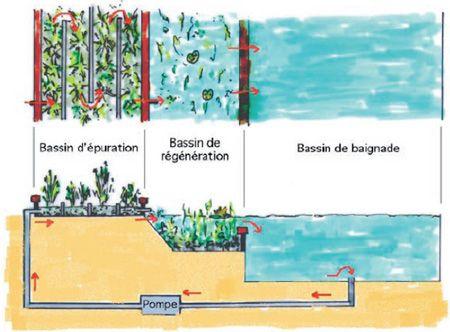 Zone de lagunage piscine naturelle - Comment ça marche?