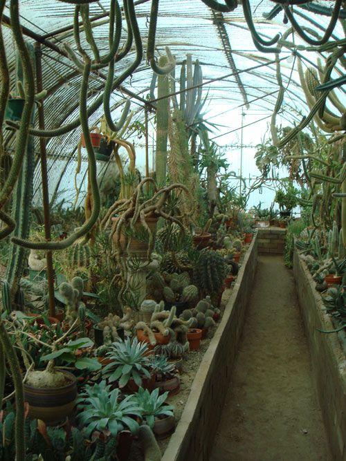 prickly paradise