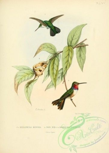 16 best Antique Hummingbird Prints images on Pinterest | Bird prints ...