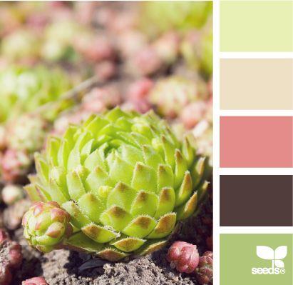 design seeds: succulent color: Color Palettes, Design Seeds, Color Inspiration, Color Combos, Door 7144Laura, Delicious, Succulent Colors