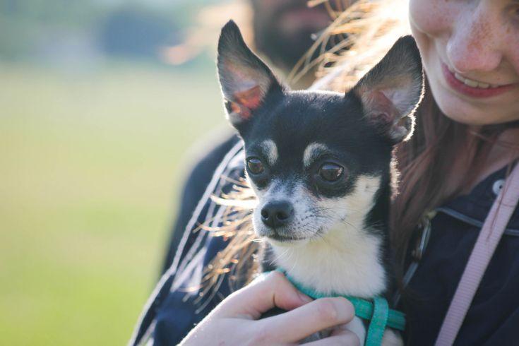 Kutyabarát szálláshelyek Magyarországon