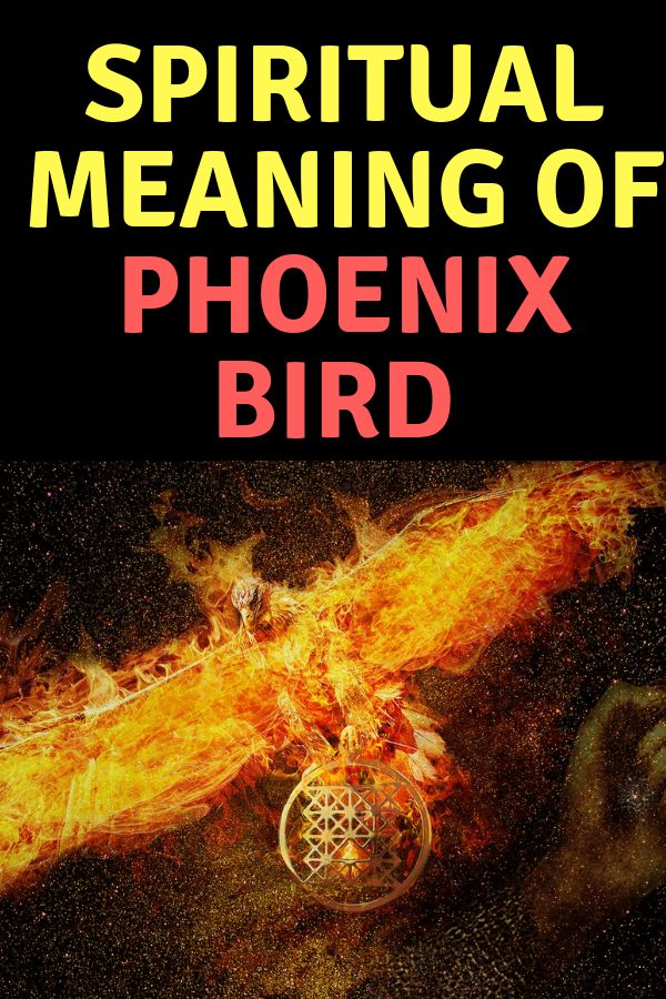 what is the meaning of a phoenix bird