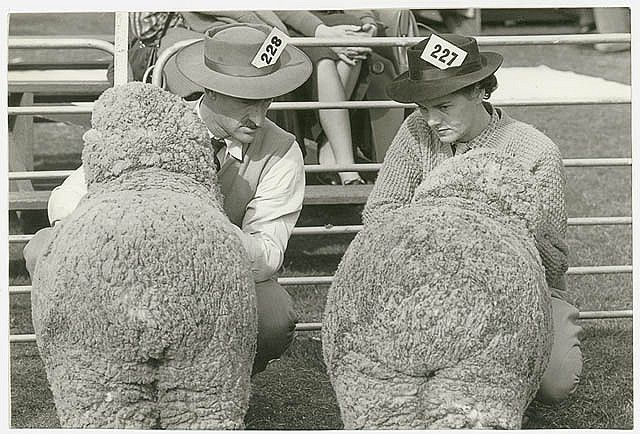 Two exhibitors eye each other's charges, Sheep Show, ca. 1945 / Jeff Carter, Walkabout photograph  Format: Photograph    Notes: This photograph is from a collection of images taken for Walkabout magazine, between 1934 and 1974.    Find more detailed information about this photographic collection: http://acms.sl.nsw.gov.au/item/itemDetailPaged.aspx?itemID=411925        From the collection of the State Library of New South Wales http://www.sl.nsw.gov.au