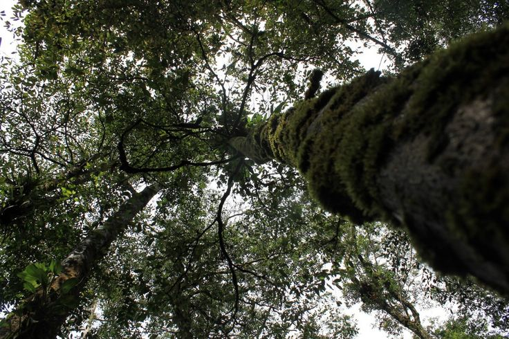 Hutan Sibolangit, di Sumatera Utara menyajikan kesejukan udara segar khas hutan tropis. Sibolangit juga menyimpan berbagai keelokan romansa alam yang luar biasa. Hutan belantara yang masih asli, tebing-tebing terjal, bebatuan dengan lumut hijau yang menempel, ditambah dengan gemuruh air terjun Dwi Warna. Petualangan ke lokasi ini merupakan petualangan sebagai obat untuk kerinduan suasana alam terbuka …