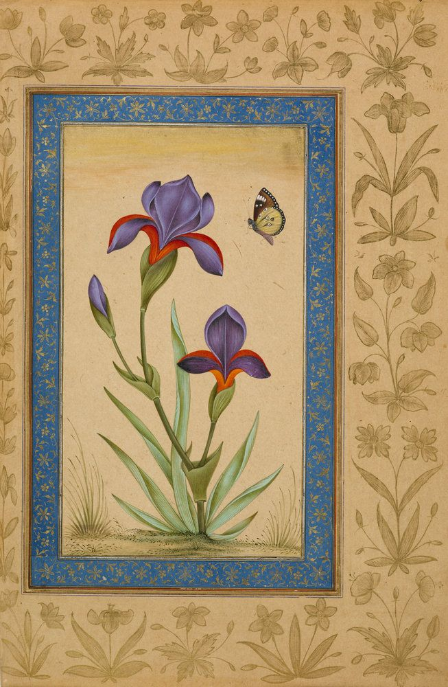 Blue iris flower with a butterfly