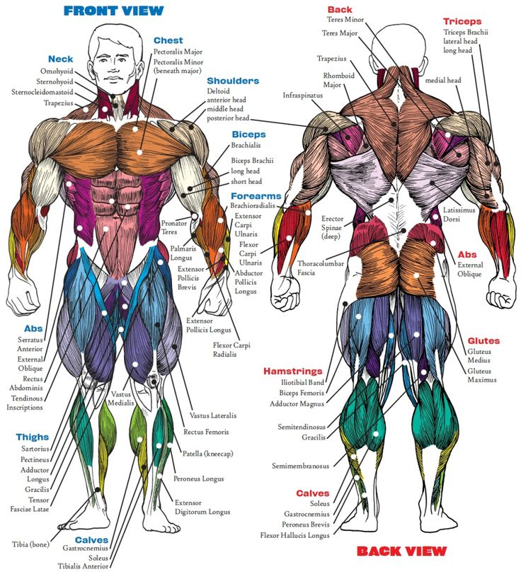 51 best fitness anatomy images on Pinterest | Fitness workouts ...
