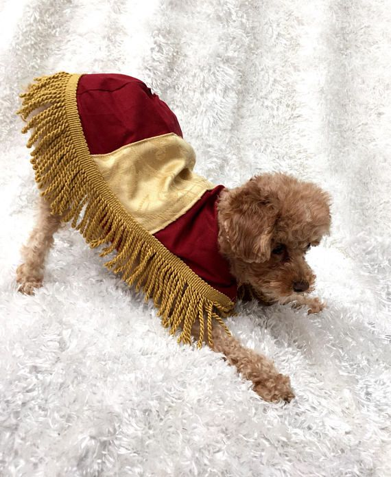 Footstool Costume Beast Costume Diy Dog Costumes