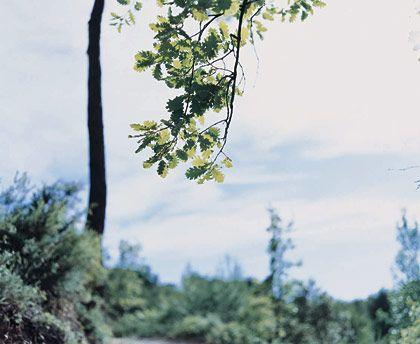 Risaku Suzuki: Mont Sainte Victoire : 鈴木理策 Risaku Suzuki: Mont Sainte Victoire - NAVER まとめ
