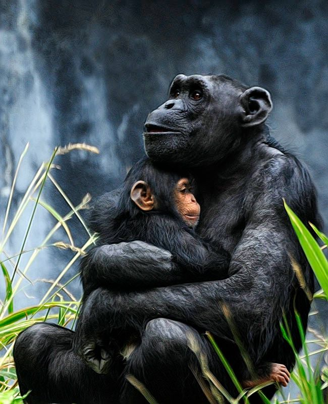 Embrace longing for freedom. Humans have devolved, we kill each other from conception to old age. We assume a superiority we do not possess & destroy that which nature weaved into such diverse, incredible creatures. When the sun sets on the human race the planet will rejoice.