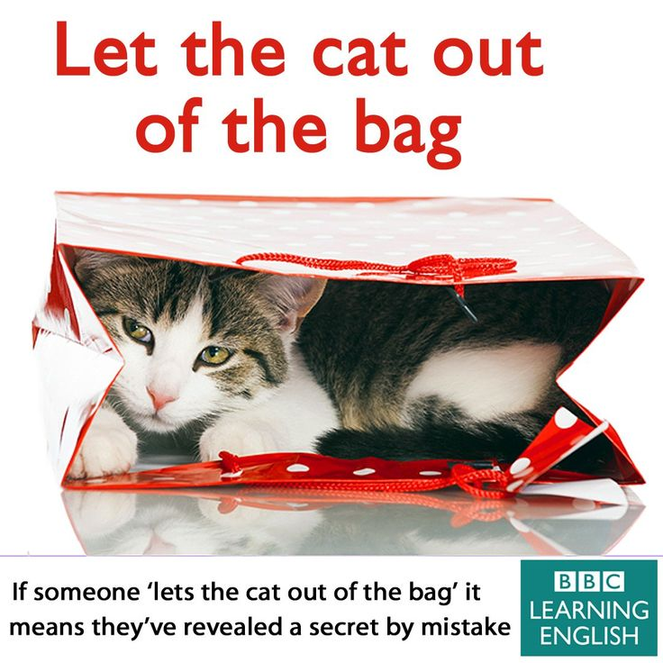 Expression: Let the cat out of the bag