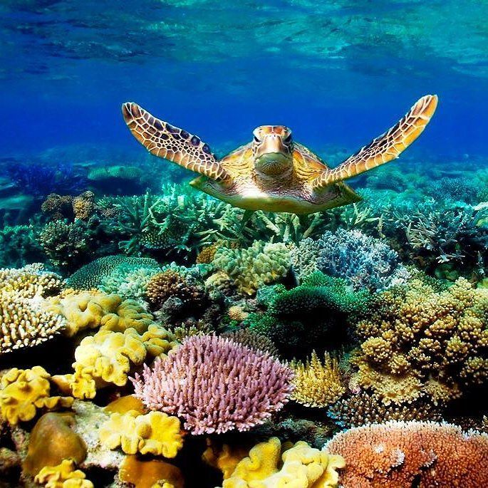 The time has come to save our sacred Great Barrier Reef in Australia Please sign the letter to Australian prime minster here: ✏✏✏✏✏✏✏✏✏✏✏✏✏✏✏✏ IDEE CADEAU / CUTE GIFT IDEA  ☞ http://gabyfeeriefr.tumblr.com/archive ✏✏✏✏✏✏✏✏✏✏✏✏✏✏✏✏