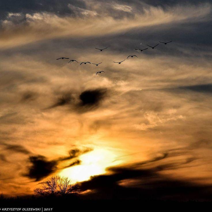 Niebo ptaszki i jakiś wiosenny zachód słońca by @fotoolik15