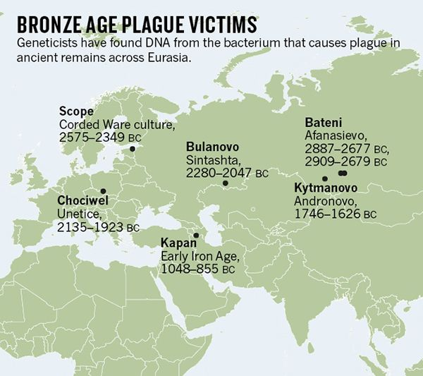 The Bronze Age plague strains were very similar to the bacteria responsible for the Black Death and modern outbreaks, but might have been less transmissible. The 6 oldest strains lacked a gene that helps Y. pestis to colonize the guts of fleas; without them Y. pestis spreads much less efficiently through blood (septicaemic plague) or saliva droplets (pneumonic plague).