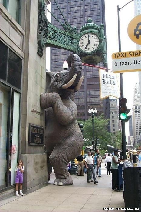 Sculpture of elephant in Chicago.....